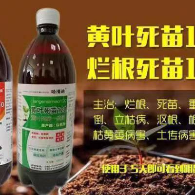 大葱叶霉病 枯萎病 北京华戎农药产品介绍 农药亮盾的作用