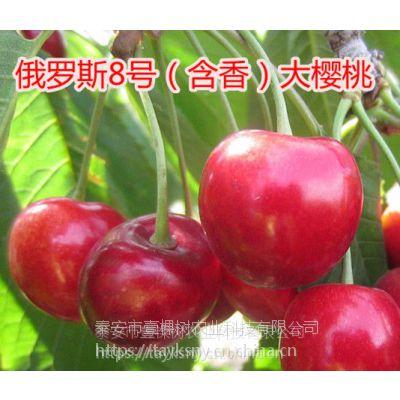 壹棵树农业砂蜜豆车厘子种苗产地