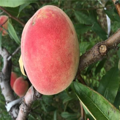 芜湖桃树苗生产基地 质量保证