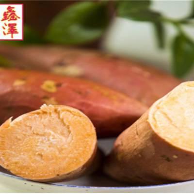 烟薯25号-鑫泽源低价高质-烟薯25号怎么样