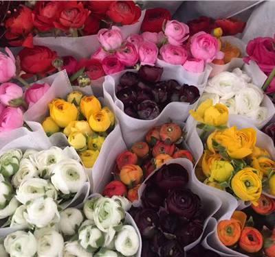 云南昆明鲜花全国直发 云南安学鲜花供应