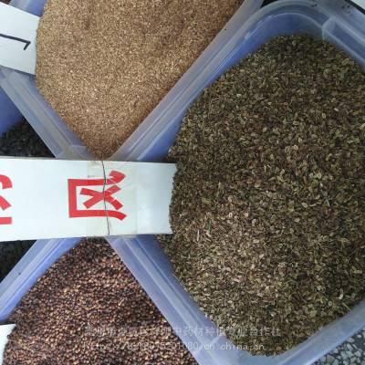 防风种子今年新货 发芽率高 产地种植技术免费指导