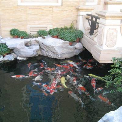丽水园林锦鲤鱼池设计哪家好高品质的选择