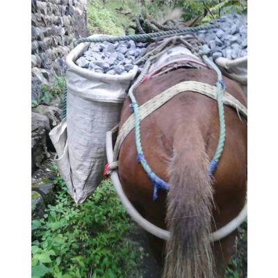 附近马帮运输队-台州马帮运输-铜陵爱年骡马运输(查看)