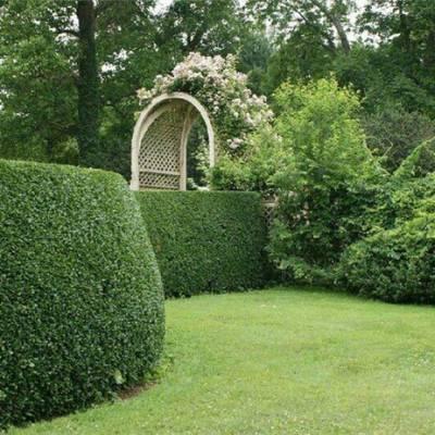 园林绿化工程-邯郸园林绿化-懋懋苗木就是好