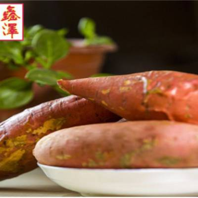 热销烟薯25-通州区烟薯25-鑫泽源质优价低