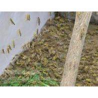 桑葚铺地结果网批发 新料结实抗氧化的防虫网批发