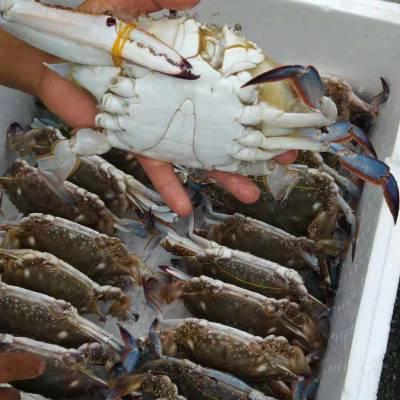供应长兴岛水产梭子蟹