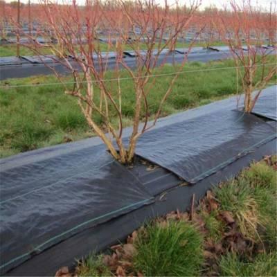 3米宽防草布在宁夏柑橘园的铺盖法