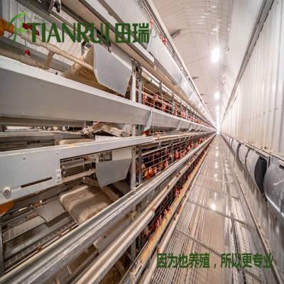 泰安全自动养鸡设备行业领先 田瑞牧业
