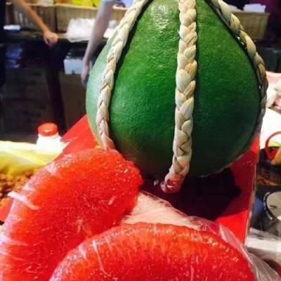 进口泰国红宝石柚子树苗批发营养杯椰糠脱毒育苗 果丰果苗场
