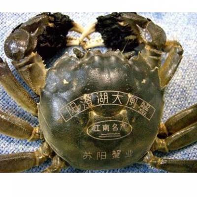 海鲜螃蟹大闸蟹激光打标机 定制刻字激光刻字机-江苏标龙激光打标机生产厂家