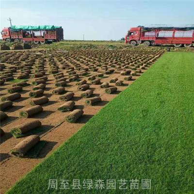 周至草坪基地 工厂绿化草坪铺装 混播草皮批发技术指导