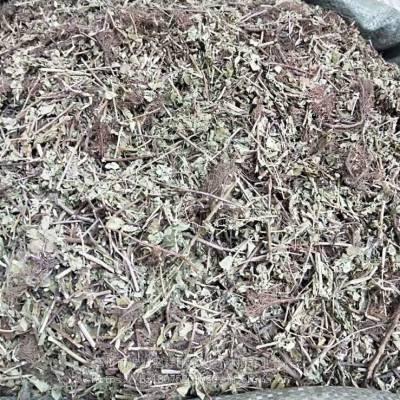 野生阴性草哪里有卖 阴性草的功效与作用