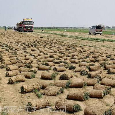 中铁项目部绿化草坪供应,工地项目部绿化施工