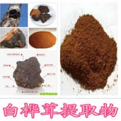 ?白桦茸提取物10:1 ?白桦茸多糖 桦褐孔菌提取物现货供应
