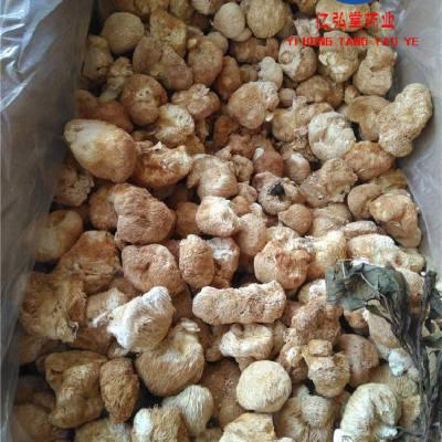 中药材猴头菇功效作用 猴头菌、猴头蘑、刺猬菌、猬菌
