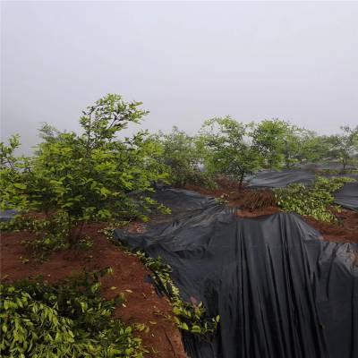 安徽渗水防草布 果园保湿园艺地布