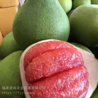 泰国红宝石青柚苗 泰国红宝石青柚苗 来自平和意尚