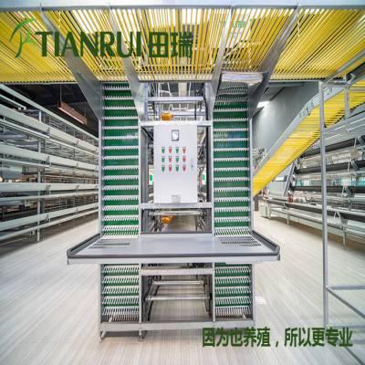 青岛全自动养殖蛋鸡设备 养殖蛋鸡设备 田瑞牧业