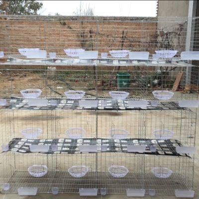 镀锌肉鸽笼,养殖场肉鸽笼厂家-双柏丝网