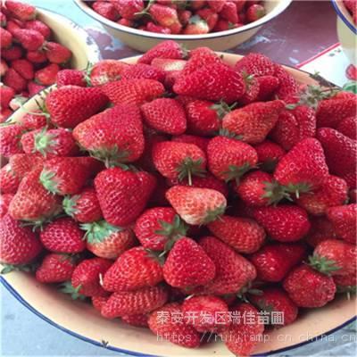 红香草莓苗、红香草莓苗多少钱一课