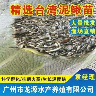 池塘养鳅,台湾泥鳅鱼苗报价,台湾泥鳅养殖场,台湾泥鳅鱼苗哪里便宜
