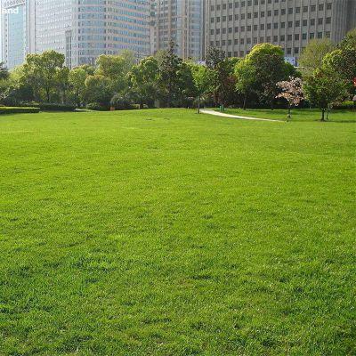 篮球场工程围挡草坪 工地庭院绿化建筑围挡专用草 聚乙烯塑料铺设运动场草皮围墙
