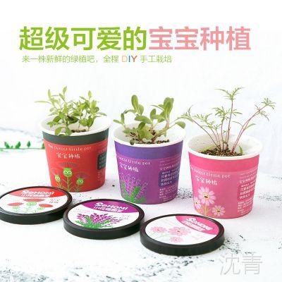 2312 创意微景观迷你可爱盆栽小盆景 办公室桌面生态植物种子