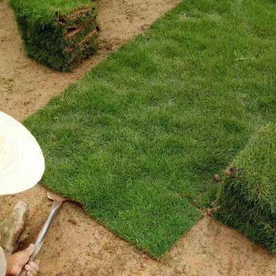 马尼拉草皮卷 矮生百慕大草坪 广西南宁足球场用的草皮的出售价格 什么价格