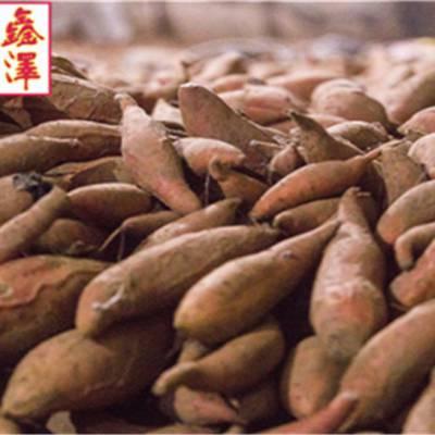 红心蜜薯报价-红心蜜薯-鑫泽源现货供应
