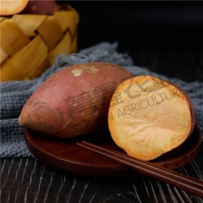 河南红薯多少钱一斤