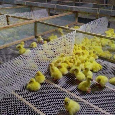 养小鸡漏粪网 养鸭子漏粪网 塑料漏粪网厂家