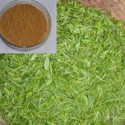 番泻叶提取物 番泻叶粉 现货供应