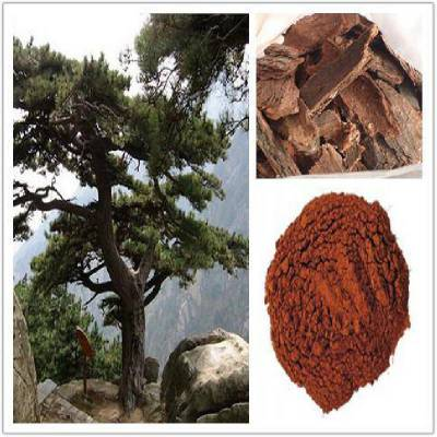 松树皮提取物10:1 松树皮原花青素95% 松树皮提取物