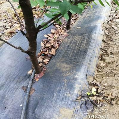 编织防草布在辽宁葡萄园的固定方法